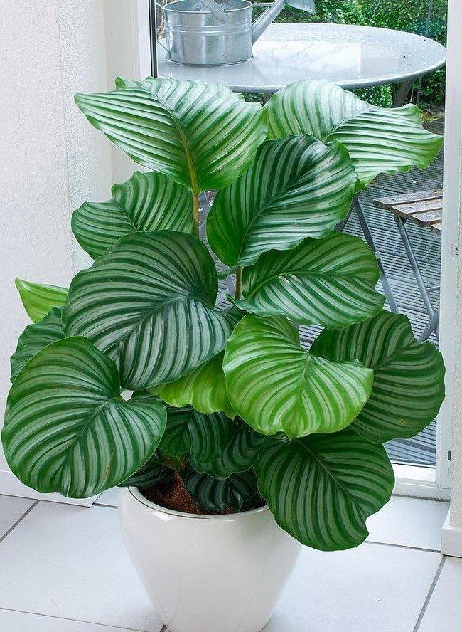 plantas-que-podem-sobreviver-ao-canto-mais-escuro-3