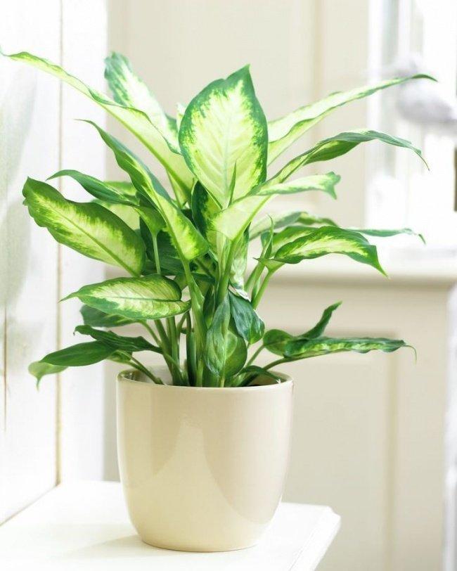 12 lindas plantas que podem sobreviver at em ambientes for Plantas para patio interior