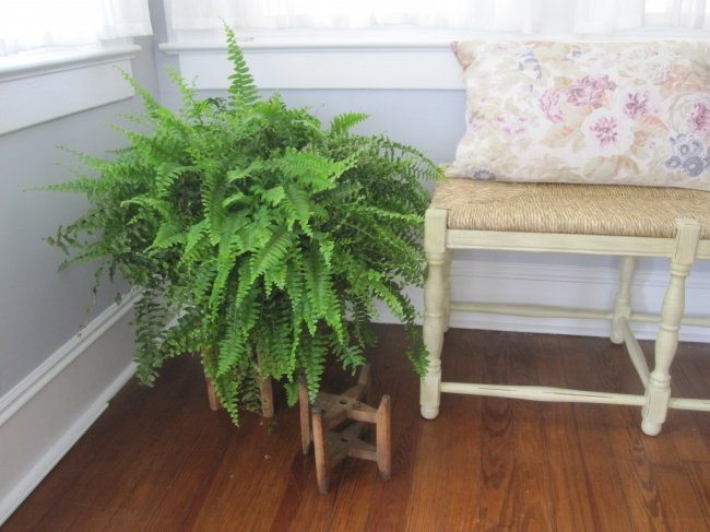 plantas-que-podem-sobreviver-ao-canto-mais-escuro-5