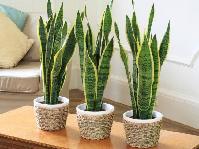 12 lindas plantas que podem sobreviver at em ambientes - Plantas decorativas de interior ...