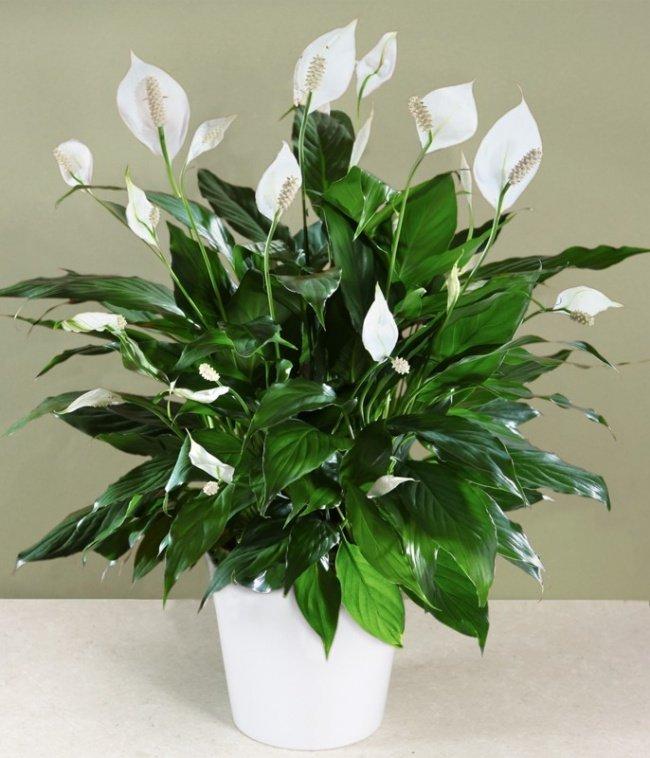 plantas-que-podem-sobreviver-ao-canto-mais-escuro-8