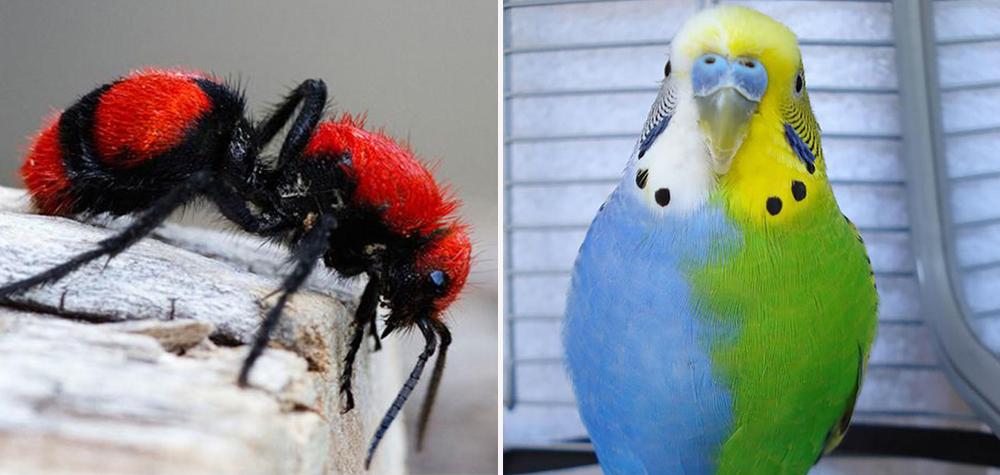 Animais-Coloridos-Destaque