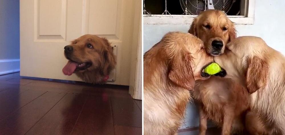 25 Cães que ainda estão descobrindo como o mundo funciona