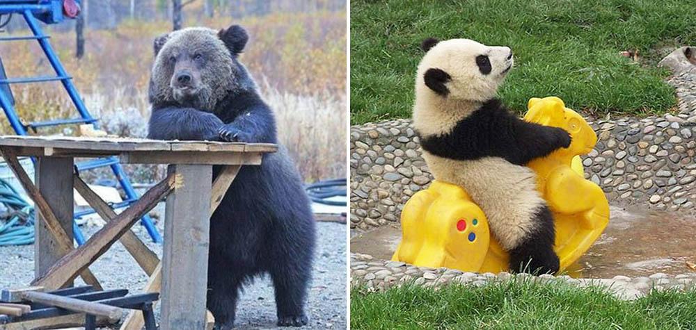 17 Ursos que se esqueceram de como ser ursos
