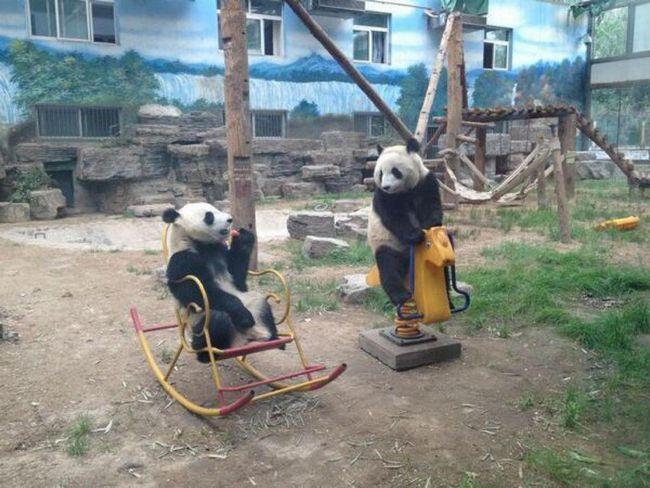 ursos-esqueceram-de-ser-ursos-1