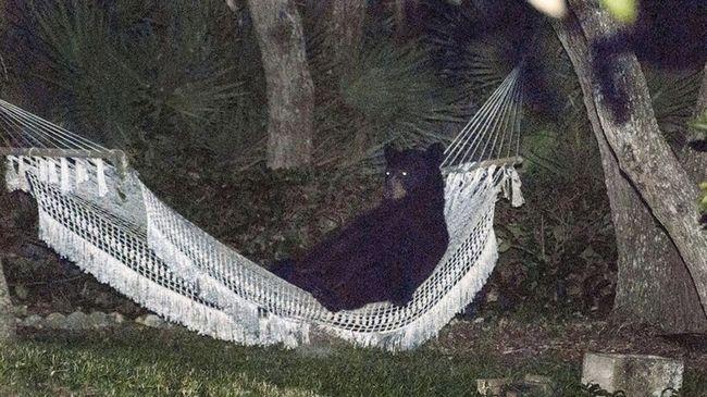 ursos-esqueceram-de-ser-ursos-11