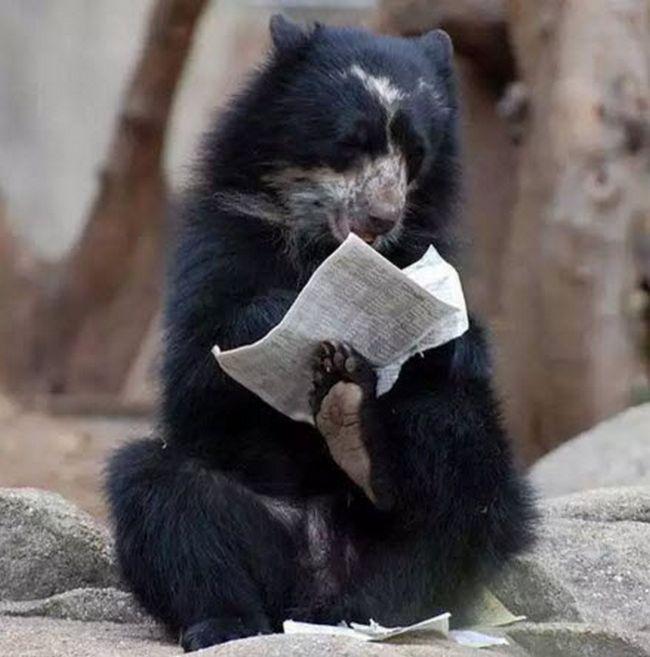 ursos-esqueceram-de-ser-ursos-14