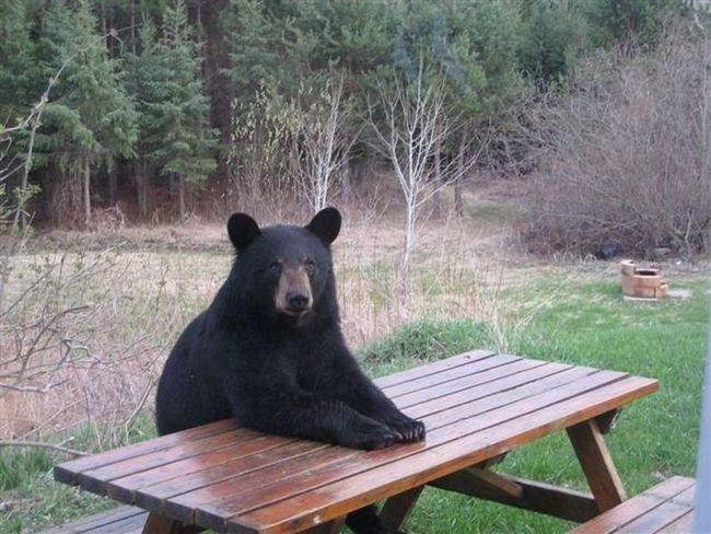 ursos-esqueceram-de-ser-ursos-15