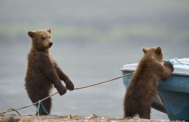 ursos-esqueceram-de-ser-ursos-16