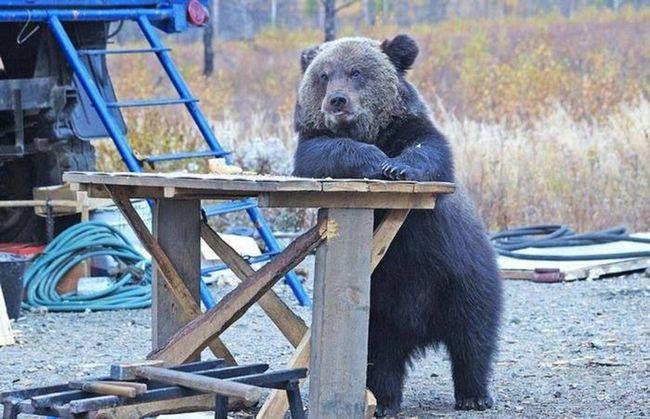 ursos-esqueceram-de-ser-ursos-2