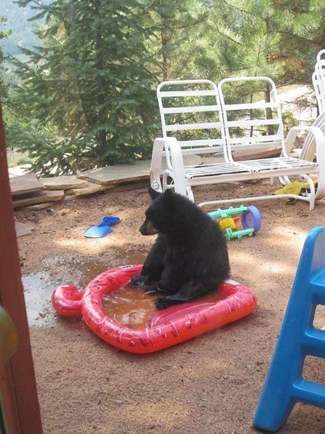 ursos-esqueceram-de-ser-ursos-3