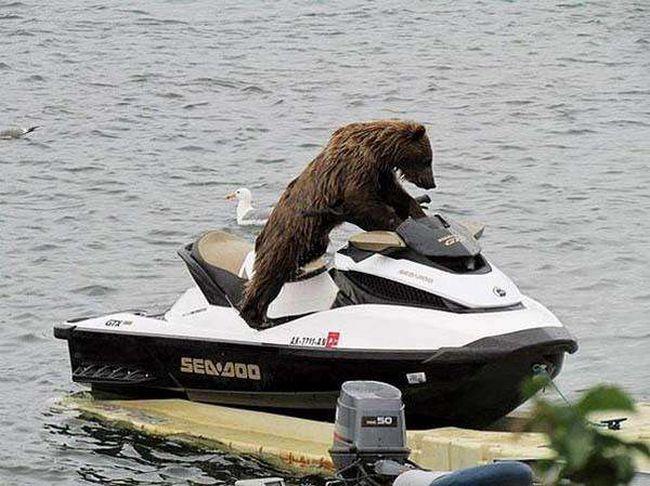 ursos-esqueceram-de-ser-ursos-4
