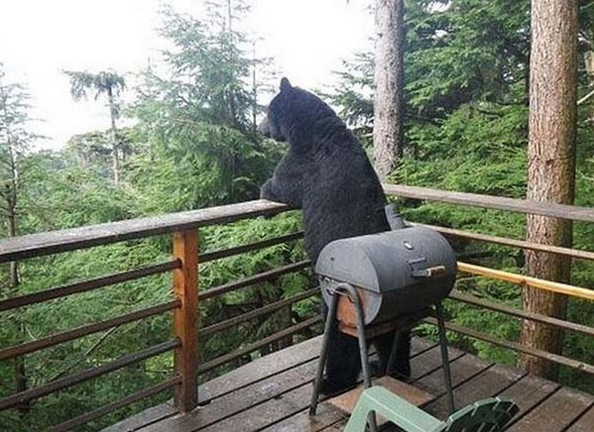 ursos-esqueceram-de-ser-ursos-5