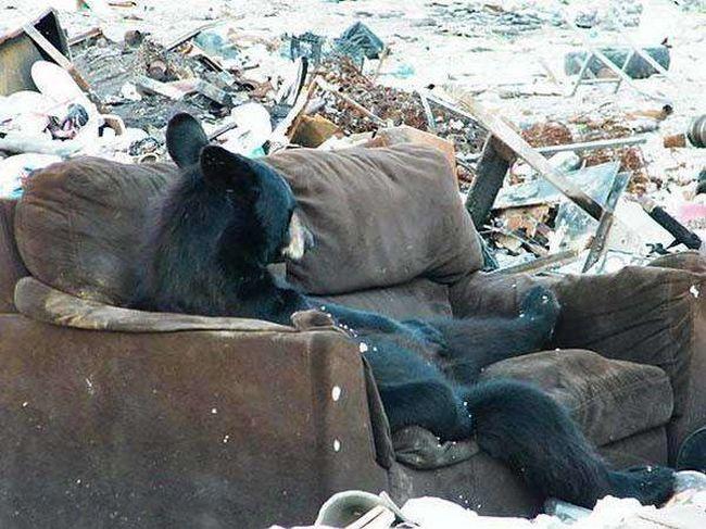 ursos-esqueceram-de-ser-ursos-6