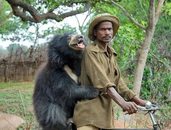 ursos-esqueceram-de-ser-ursos-8