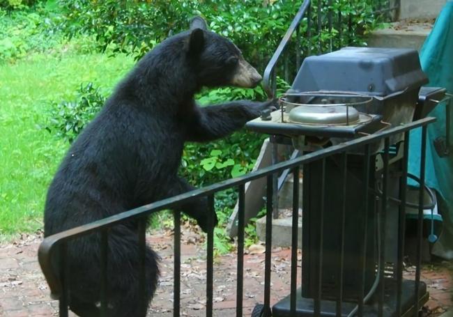 ursos-esqueceram-de-ser-ursos-9