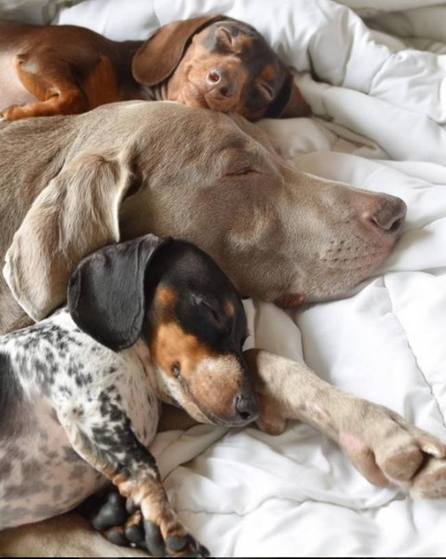 Cachorros-Amigos-1