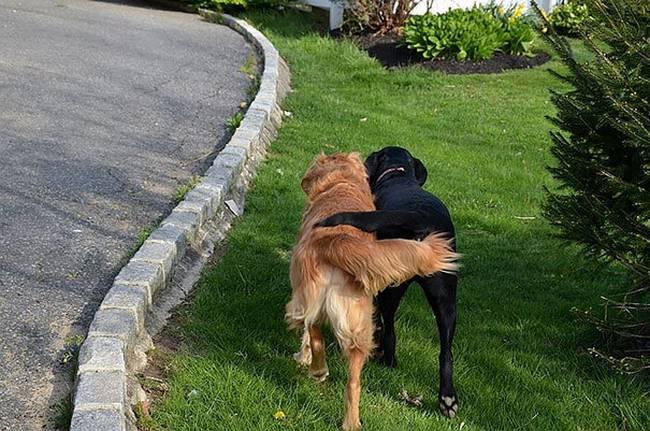 Cachorros-Amigos-12