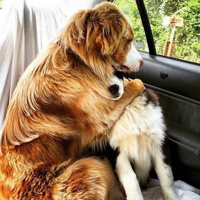 Cachorros-Amigos-13