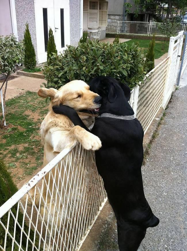 Cachorros-Amigos-14