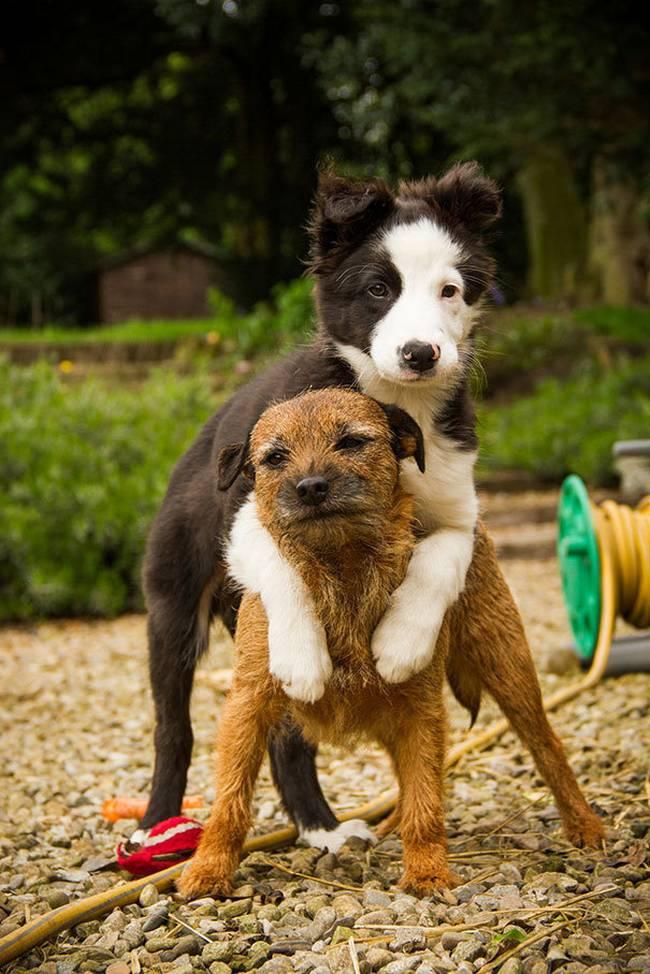 Cachorros-Amigos-17