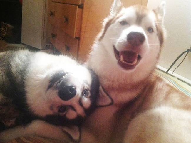 Cachorros-Amigos-19