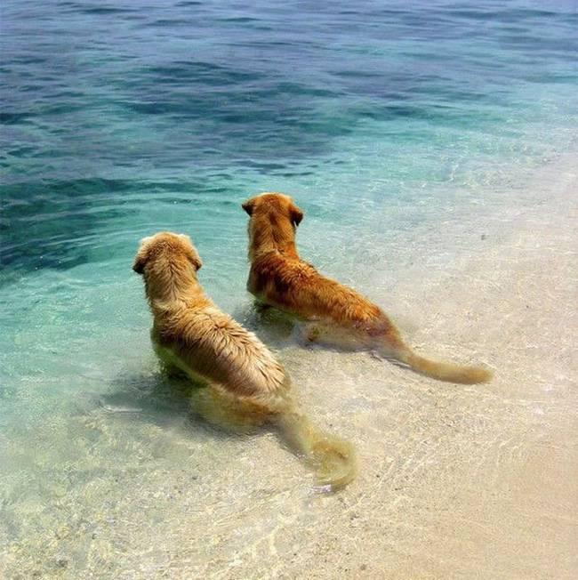 Cachorros-Amigos-2