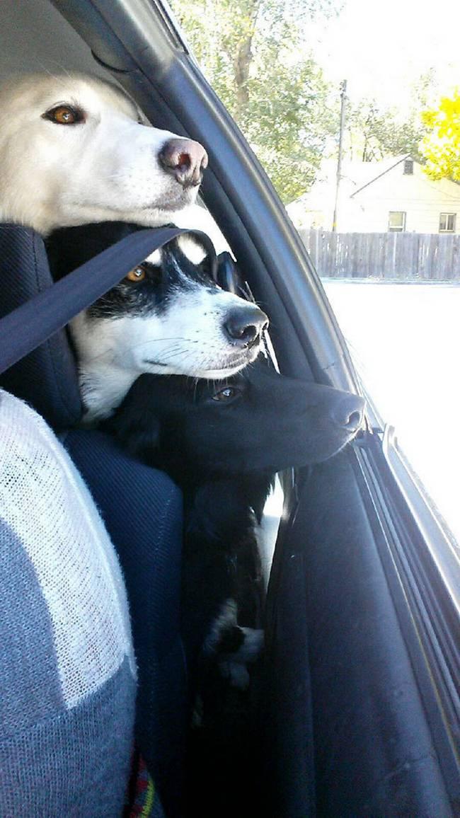 Cachorros-Amigos-22