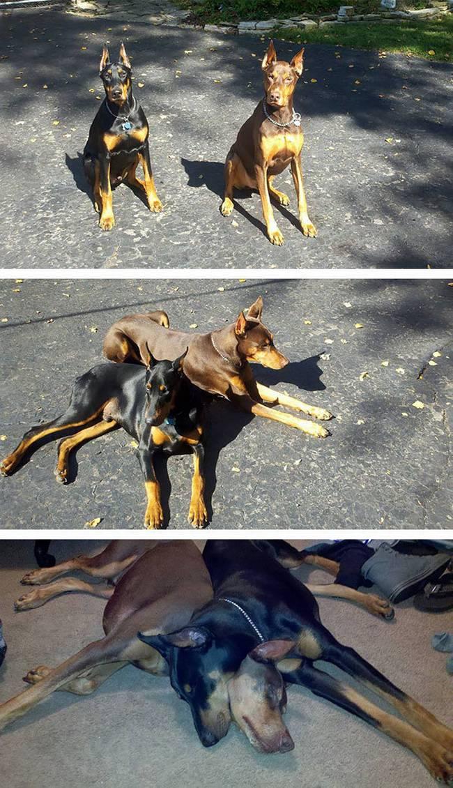Cachorros-Amigos-24