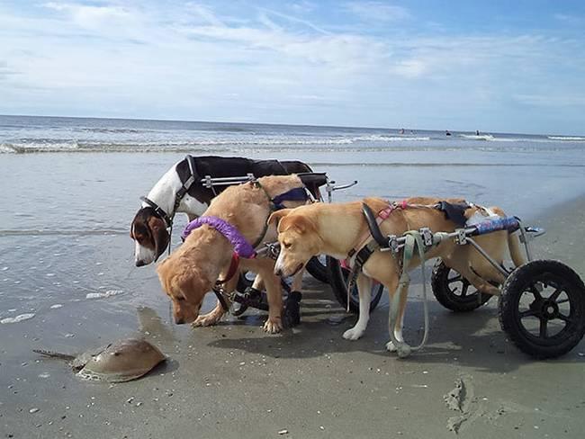 Cachorros-Amigos-26