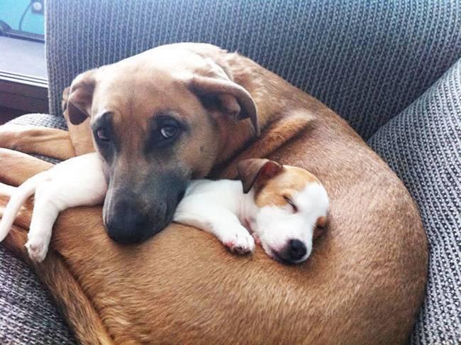 Cachorros-Amigos-3