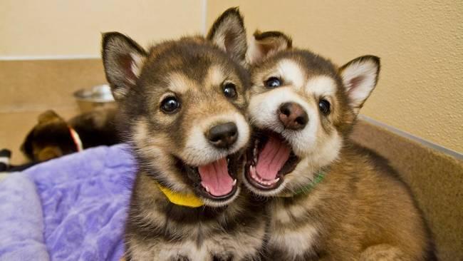 Cachorros-Amigos-4