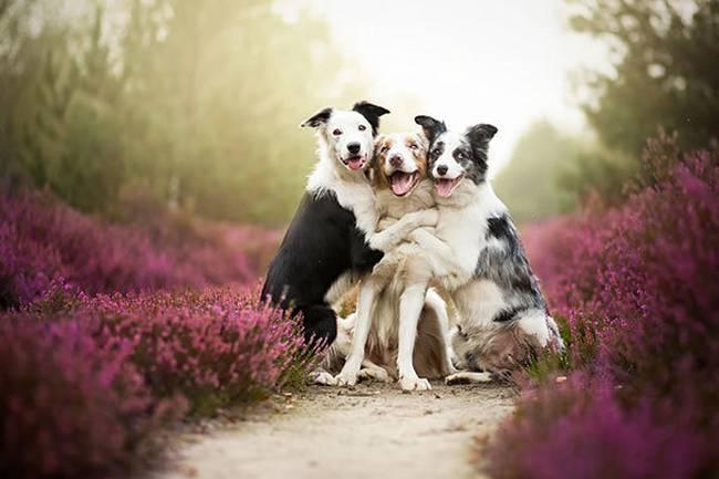 Cachorros-Amigos-6