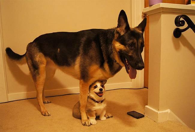 Cachorros-Amigos-7