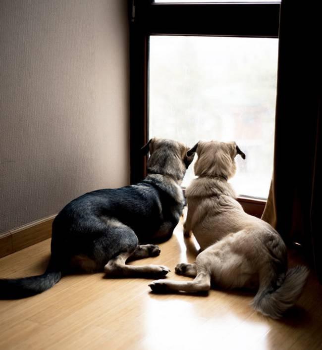 Cachorros-Amigos-8