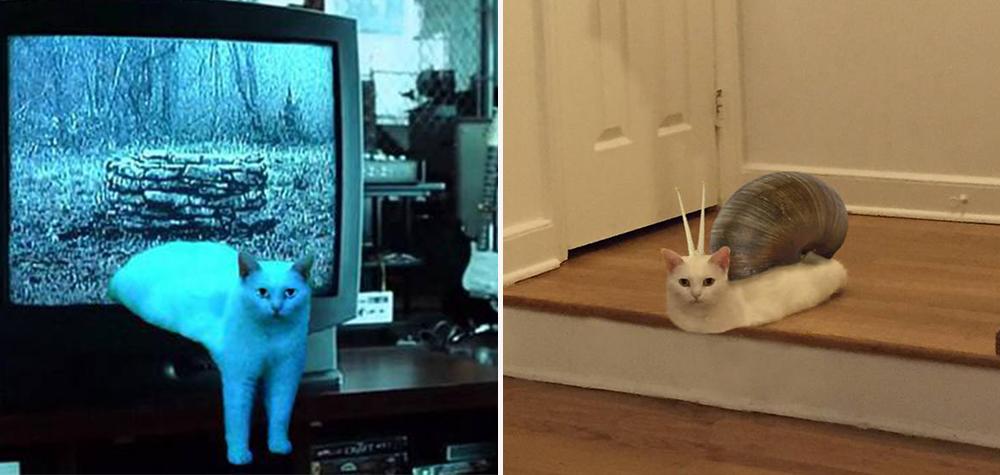 """A internet está se divertindo muito com esse gato """"derretido"""""""