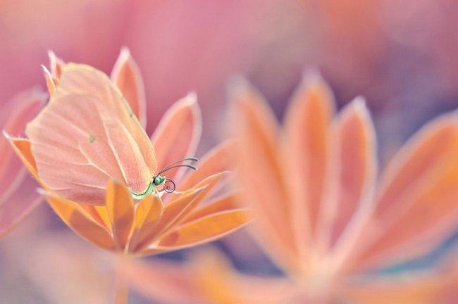 beleza-da-natureza-1