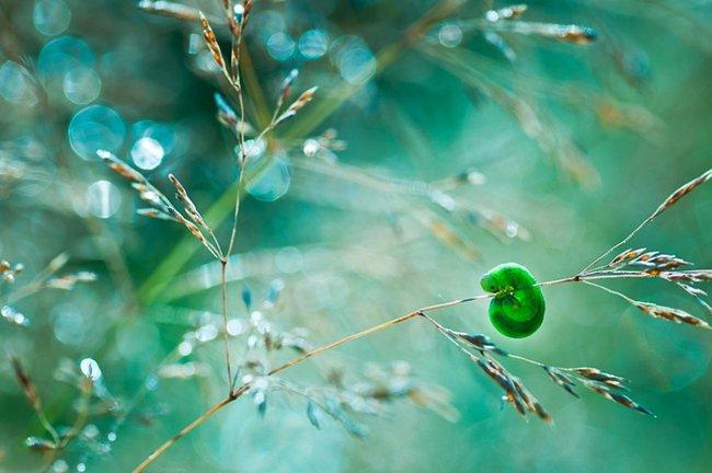 beleza-da-natureza-10