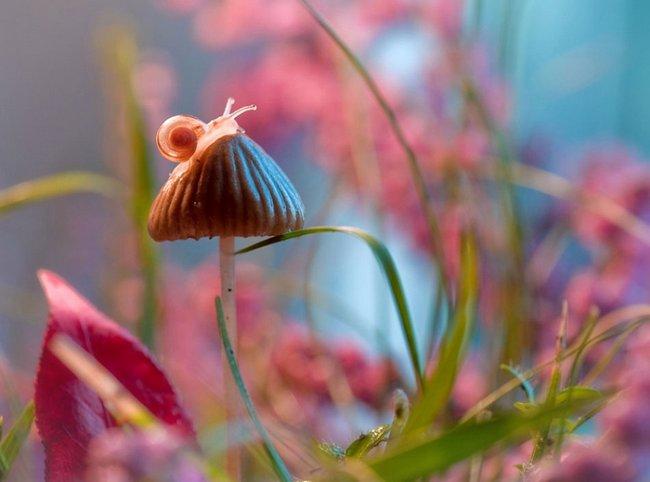 beleza-da-natureza-11
