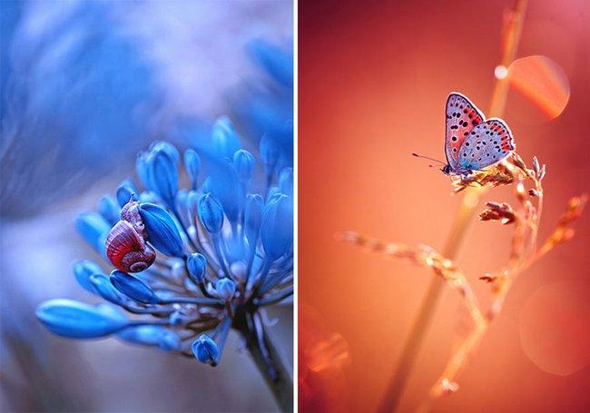 beleza-da-natureza-4