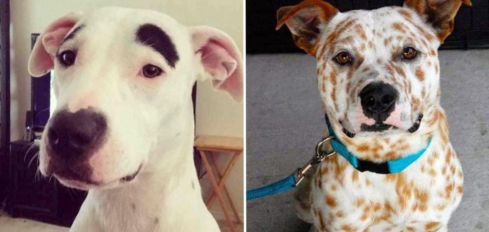 15 Cachorros charmosos que foram personalizados pela própria natureza