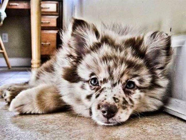 cachorros-personalizados-pela-própria-natureza-1