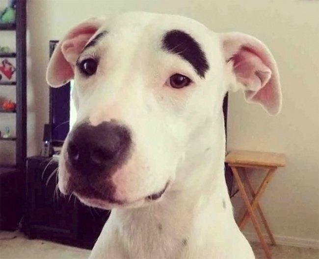 cachorros-personalizados-pela-própria-natureza-12
