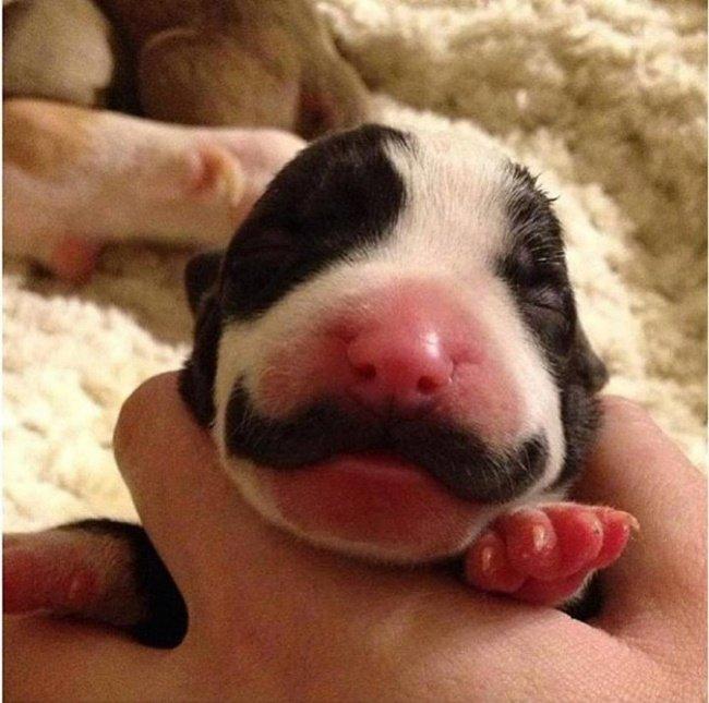 cachorros-personalizados-pela-própria-natureza-13