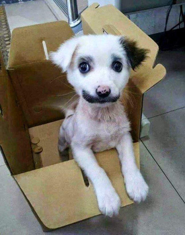 cachorros-personalizados-pela-própria-natureza-15