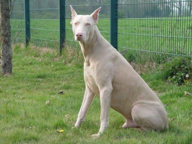 cachorros-personalizados-pela-própria-natureza-2