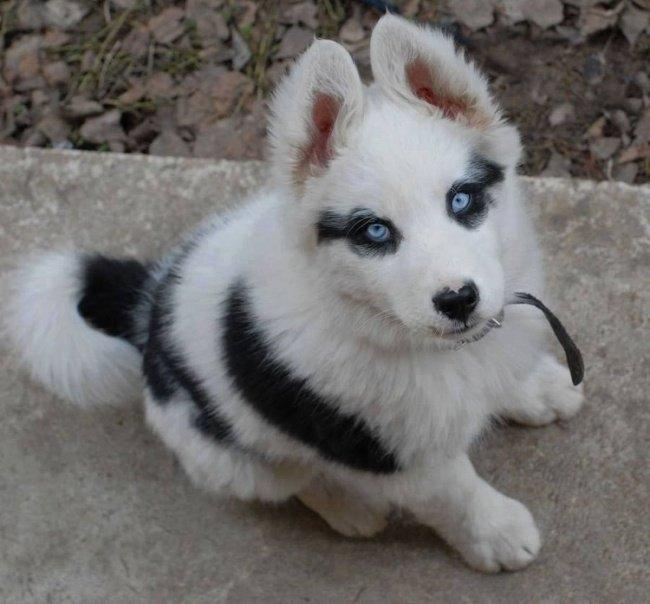 cachorros-personalizados-pela-própria-natureza-3