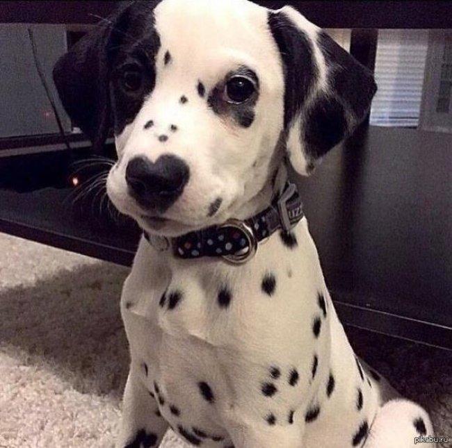 cachorros-personalizados-pela-própria-natureza-5
