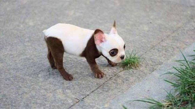 cachorros-personalizados-pela-própria-natureza-7