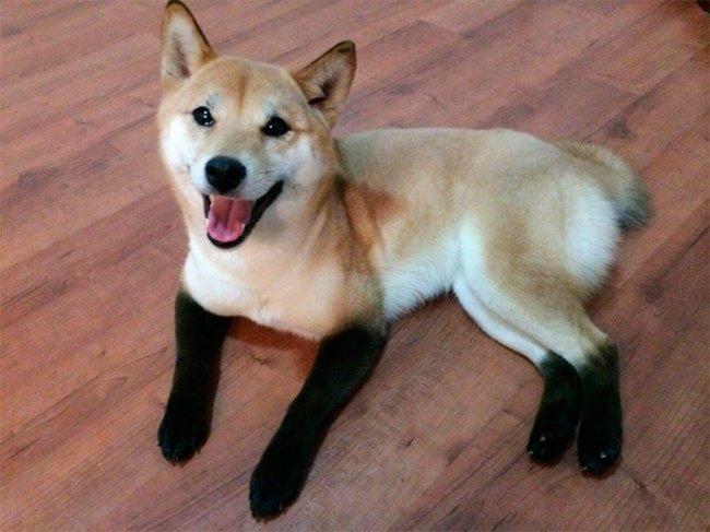 cachorros-personalizados-pela-própria-natureza-8